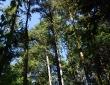 2012-05-13_17-52-31_nikon-d80