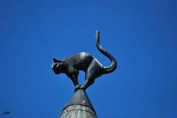 2010-06-27 - Le chat