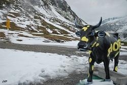 2010-06-22 - Oh la vache!!!